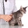 Ветеринарные клиники в Знаменском